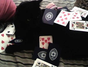 black cat amid scattered cards