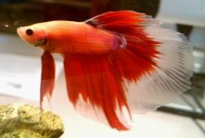 fish!!