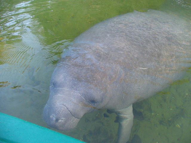 manatee-on-the-boat