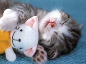 too-cute-kitten11
